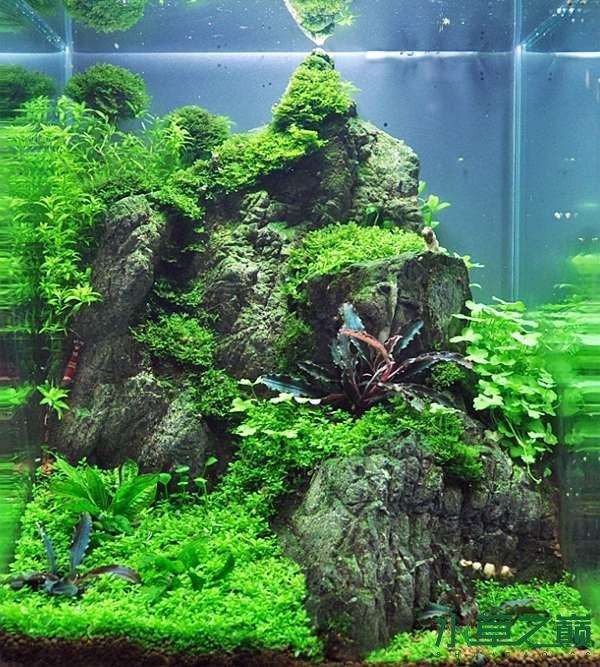 德国水草缸艺术造景作品 北京龙鱼论坛 北京龙鱼第5张
