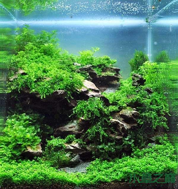 德国水草缸艺术造景作品 北京龙鱼论坛 北京龙鱼第12张