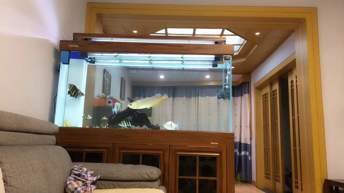 后天红龙到不知道能不能混养成功 北京观赏鱼 北京龙鱼第1张
