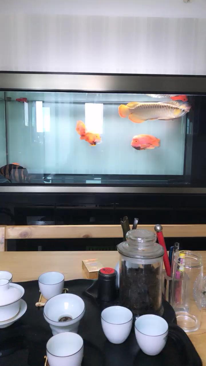 今天心情好龙鱼 北京龙鱼论坛 北京龙鱼第1张
