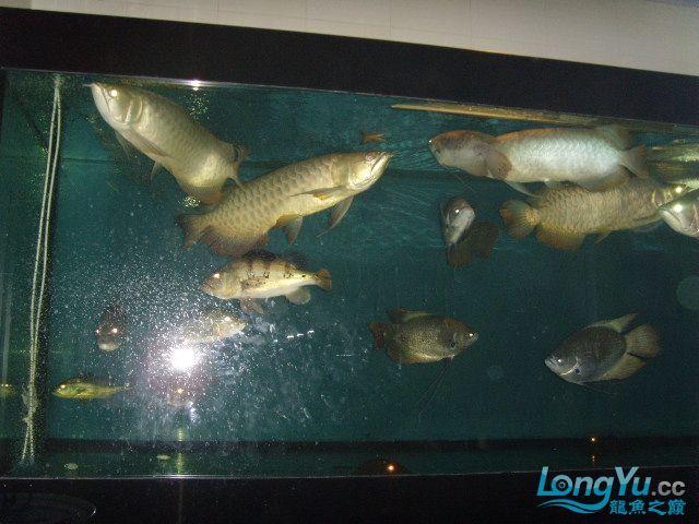 现在的乱混 北京龙鱼论坛 北京龙鱼第1张