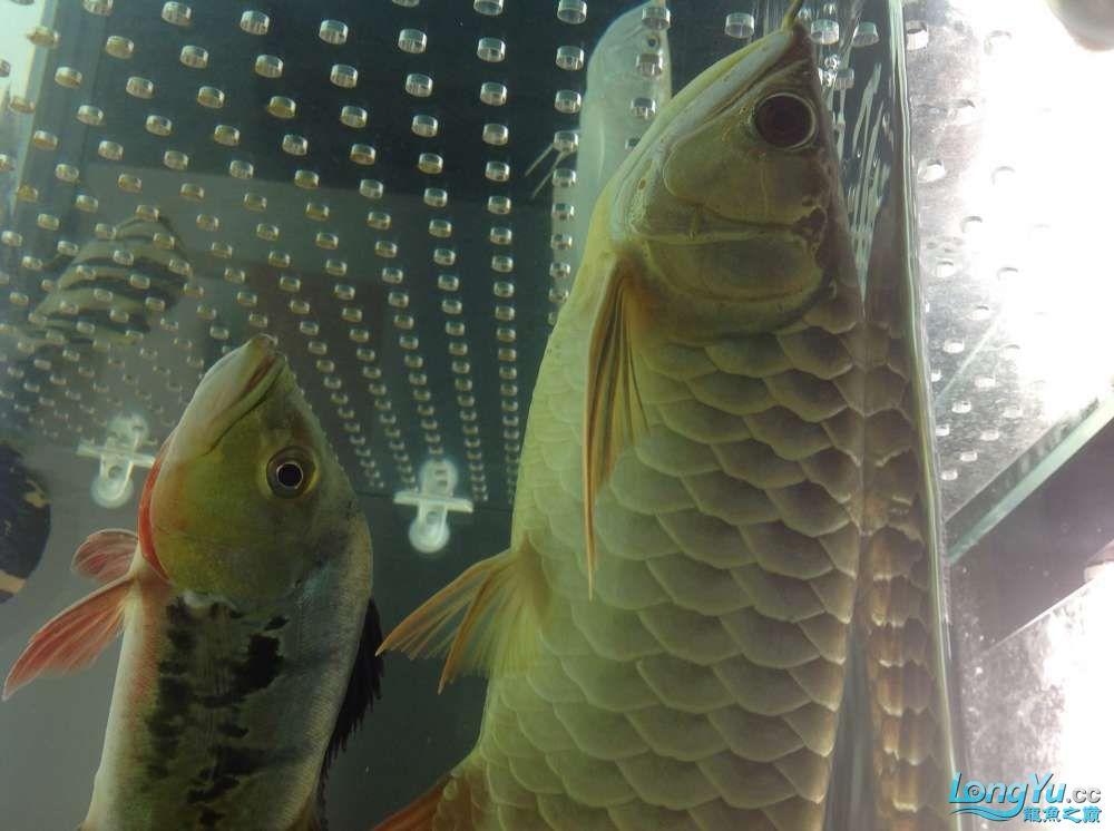 求各路大神都帮帮我这个到底是病还是伤??? 北京观赏鱼 北京龙鱼第5张