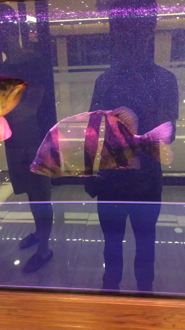 想开直播求关注 北京观赏鱼 北京龙鱼第1张