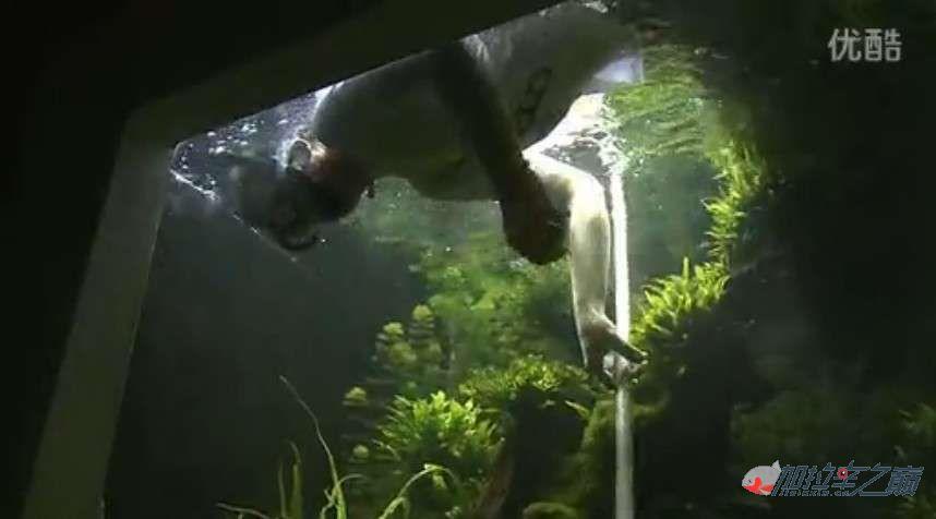 老外是如此打造它的亚马北京哪个水族店有直纹飞凤逊鱼缸及强大过滤的
