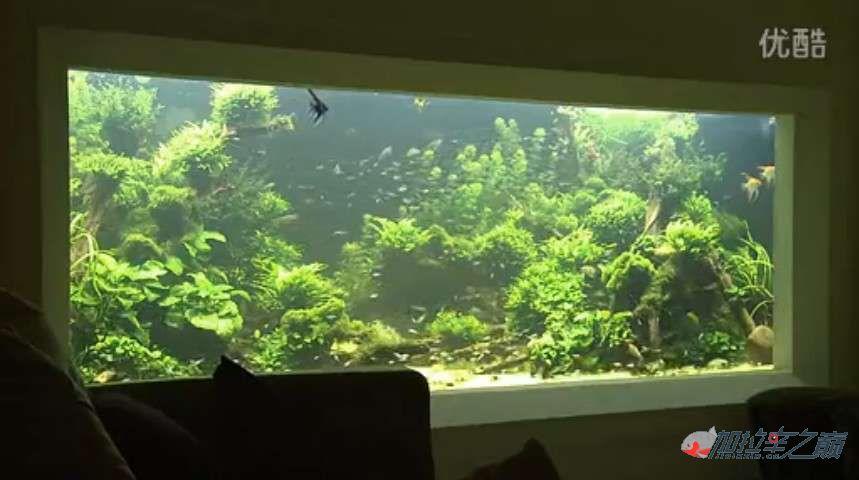 老外是如此打造它的亚马北京哪个水族店有直纹飞凤逊鱼缸及强大过滤的 北京观赏鱼 北京龙鱼第3张