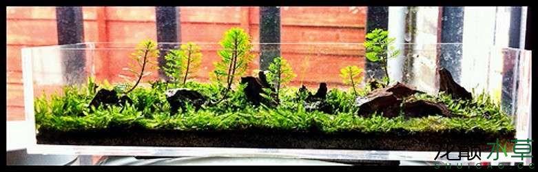 巴掌大小的森林造景 北京观赏鱼 北京龙鱼第1张
