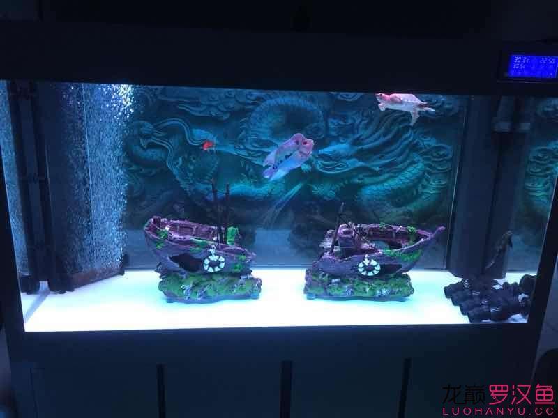 这样的基情会不会影响起头呢? 北京观赏鱼 北京龙鱼第1张