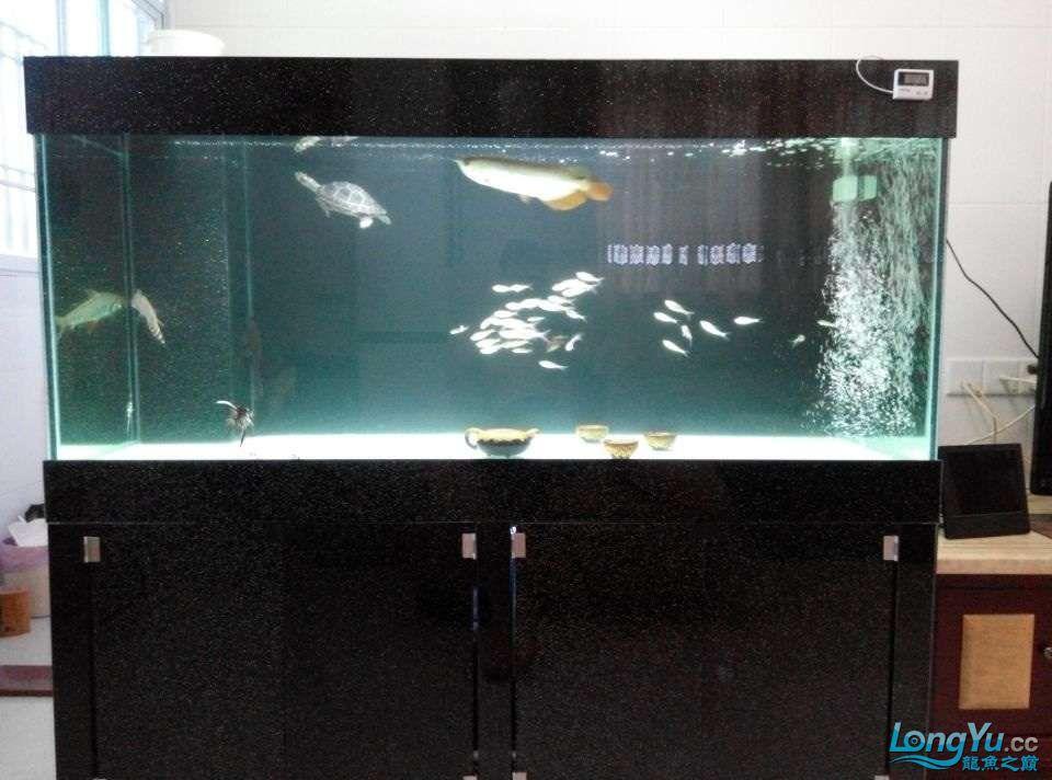 小三杂三闯大缸北京乌龟 北京观赏鱼 北京龙鱼第2张