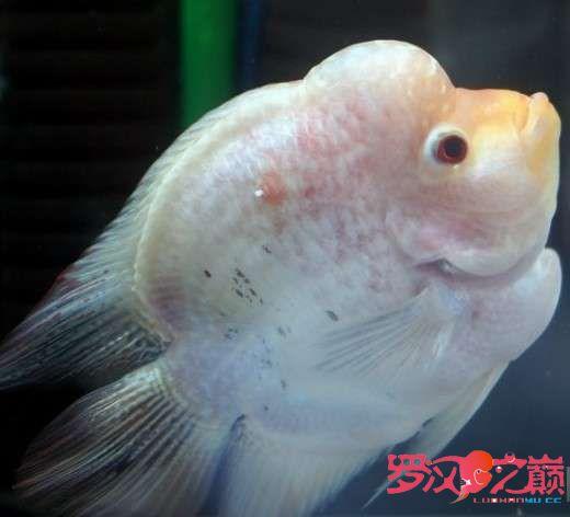 新练就的技能配置好了就是漂亮 北京观赏鱼 北京龙鱼第1张