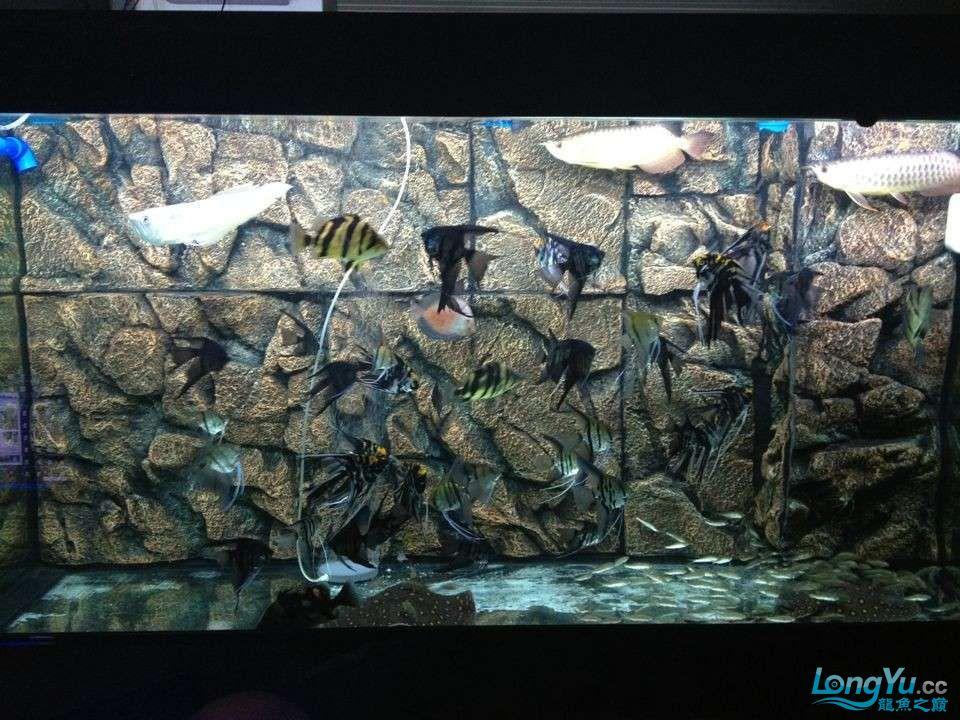 第二次混养 北京观赏鱼 北京龙鱼第5张