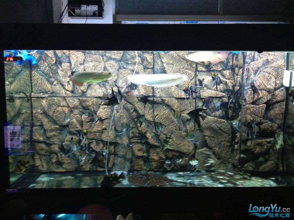 第二次混养 北京观赏鱼 北京龙鱼第4张