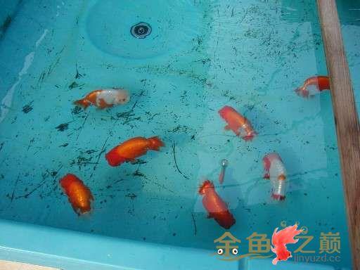 A课长家的鱼场 北京龙鱼论坛 北京龙鱼第3张