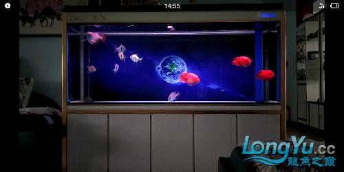 陋缸陋鱼龙鱼 北京观赏鱼 北京龙鱼第4张
