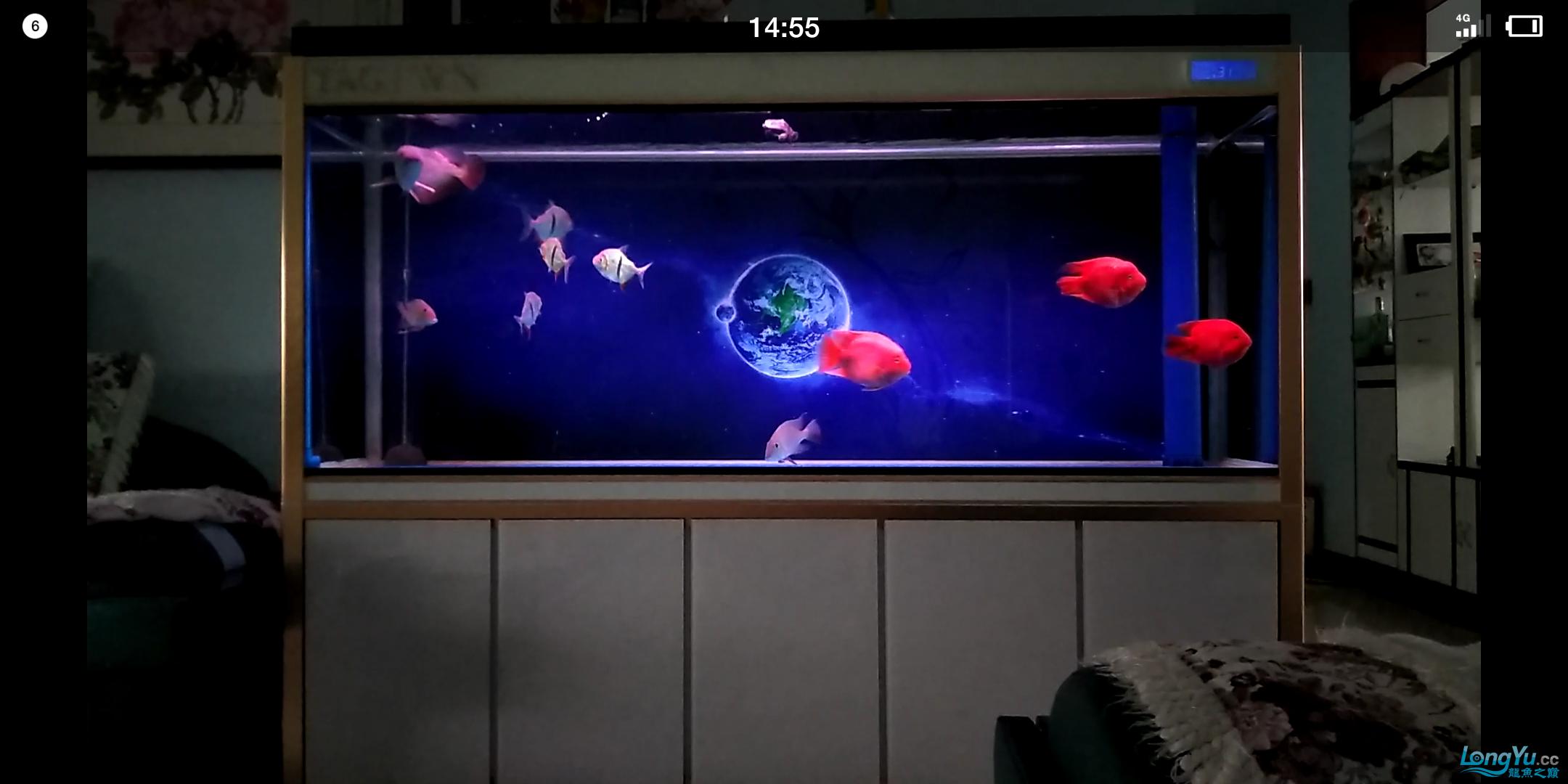 陋缸陋鱼龙鱼 北京观赏鱼 北京龙鱼第5张