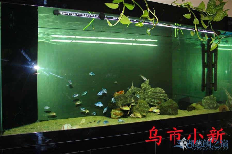 乌市小新——三湖开缸贴顺便更新下鱼(求精) 北京龙鱼论坛 北京龙鱼第18张