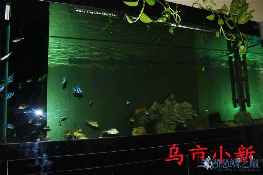 乌市小新——三湖开缸贴顺便更新下鱼(求精) 北京龙鱼论坛 北京龙鱼第37张