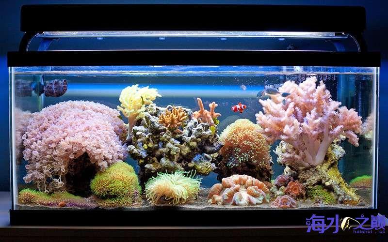 北京四纹虎来看看这缸闪千怎么样 北京观赏鱼 北京龙鱼第2张