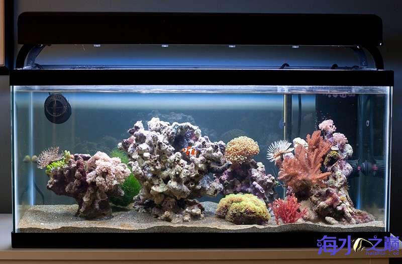 北京四纹虎来看看这缸闪千怎么样 北京观赏鱼 北京龙鱼第3张