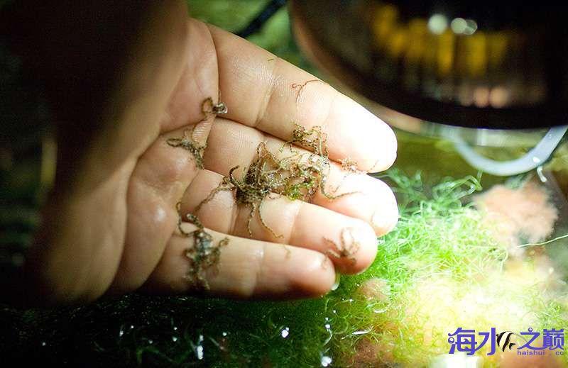 北京四纹虎来看看这缸闪千怎么样 北京观赏鱼 北京龙鱼第6张