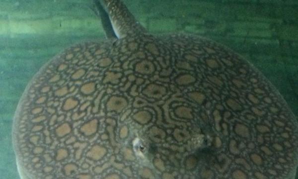 北京四纹虎来看看这缸闪千怎么样 北京观赏鱼 北京龙鱼第11张