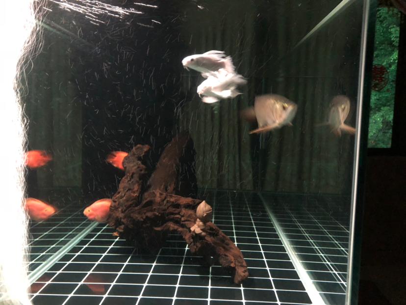 想问一下广东鱼友圈