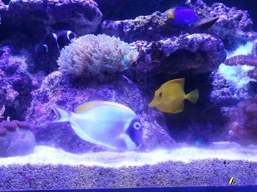 新手下海生物入缸一个月了 北京观赏鱼 北京龙鱼第2张