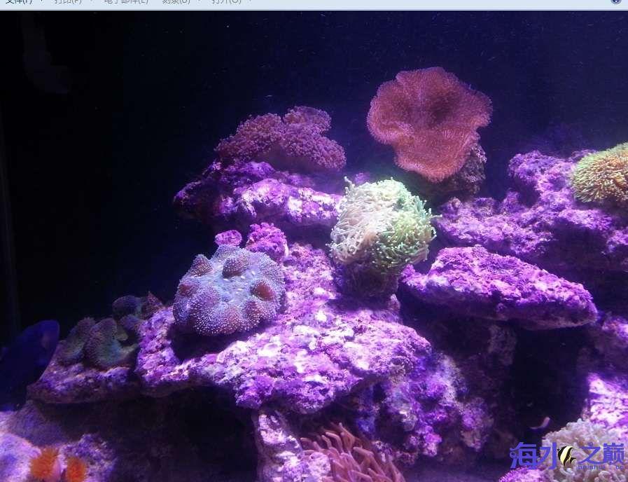 新手下海生物入缸一个月了 北京观赏鱼 北京龙鱼第3张