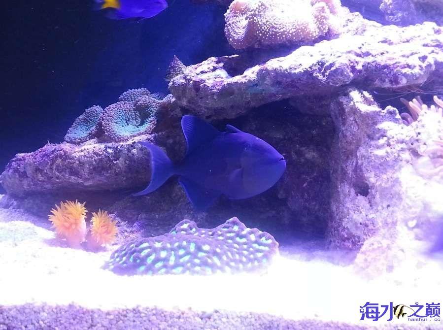 新手下海生物入缸一个月了 北京观赏鱼 北京龙鱼第5张