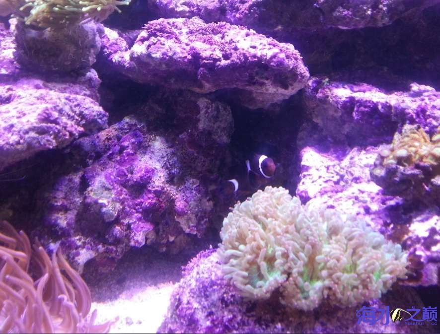 新手下海生物入缸一个月了 北京观赏鱼 北京龙鱼第6张