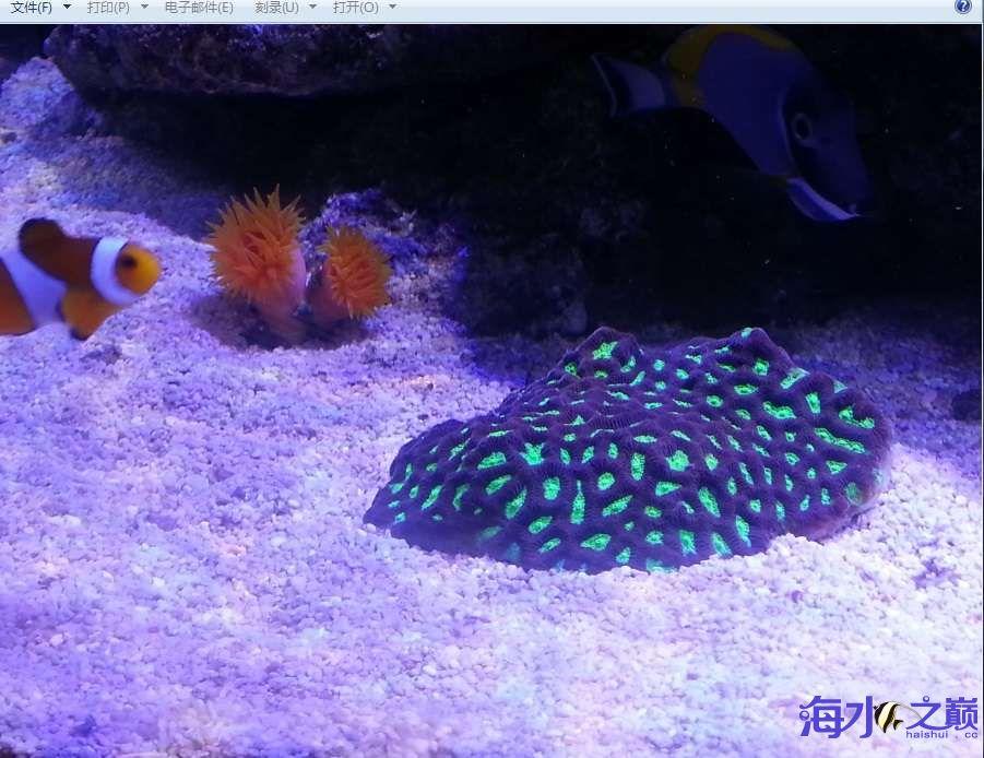 新手下海生物入缸一个月了 北京观赏鱼 北京龙鱼第7张