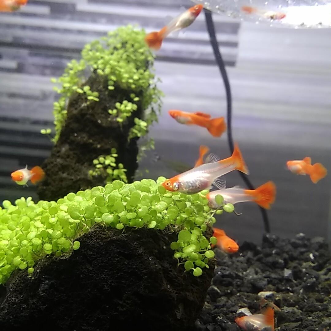 小鱼也都压成了都很健康 北京龙鱼论坛 北京龙鱼第3张