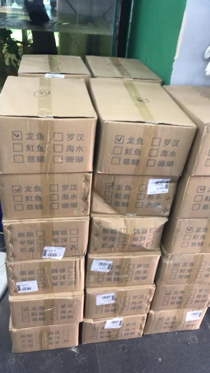 呼市极鼎水族馆有货 北京观赏鱼 北京龙鱼第1张