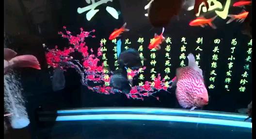 这龙鱼喜欢在下面游啊 北京龙鱼论坛 北京龙鱼第1张