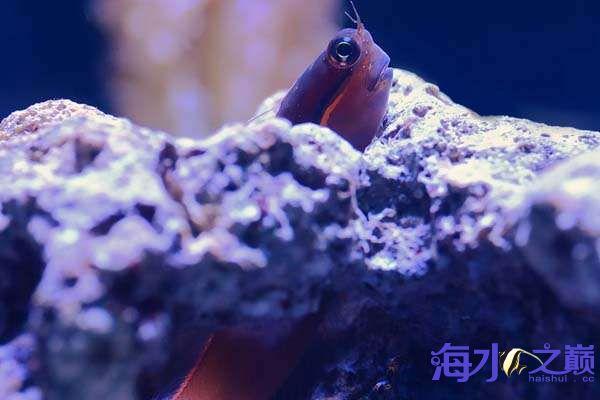 珊瑚和鱼一起长大 北京龙鱼论坛 北京龙鱼第1张