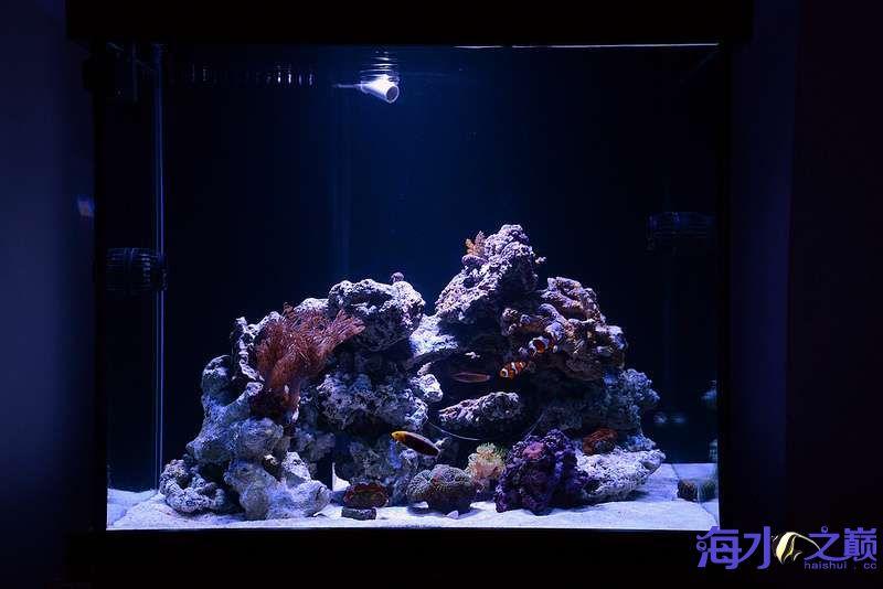 珊瑚和鱼一起长大 北京龙鱼论坛 北京龙鱼第2张