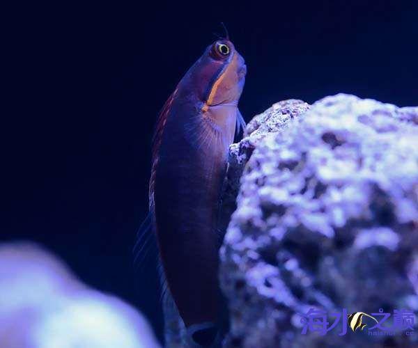 珊瑚和鱼一起长大 北京龙鱼论坛 北京龙鱼第4张