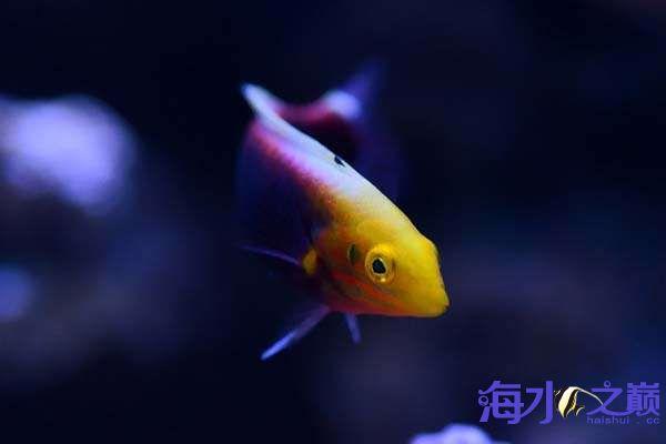珊瑚和鱼一起长大 北京龙鱼论坛 北京龙鱼第5张