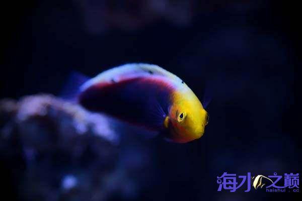 珊瑚和鱼一起长大 北京龙鱼论坛 北京龙鱼第6张