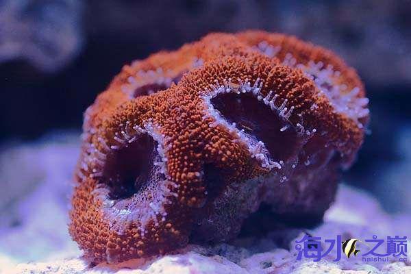 珊瑚和鱼一起长大 北京龙鱼论坛 北京龙鱼第7张