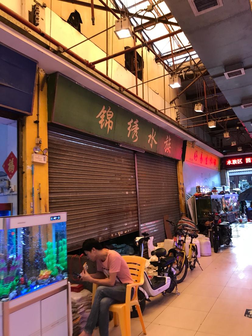 今天回花地湾了 北京龙鱼论坛 北京龙鱼第2张
