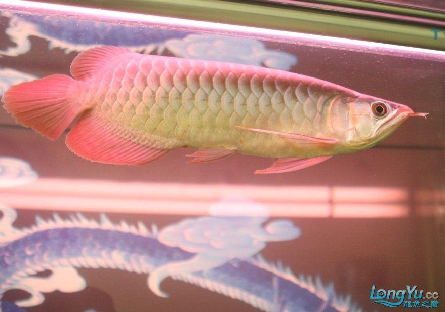 专业的设备专业的技术@@@@ 北京观赏鱼 北京龙鱼第1张