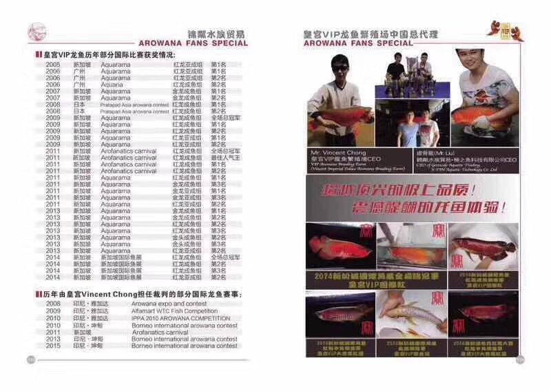 皇宫VIP龙鱼繁殖场 北京观赏鱼 北京龙鱼第1张