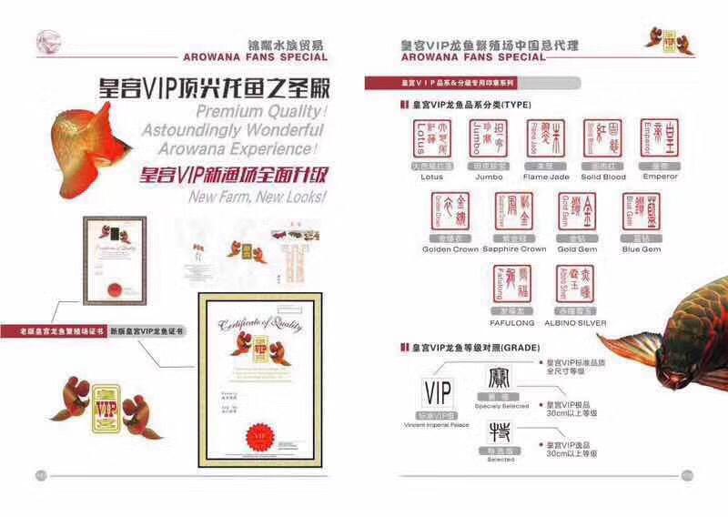 皇宫VIP龙鱼繁殖场 北京观赏鱼 北京龙鱼第3张