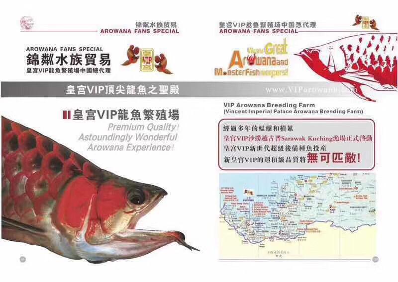 皇宫VIP龙鱼繁殖场 北京观赏鱼 北京龙鱼第5张