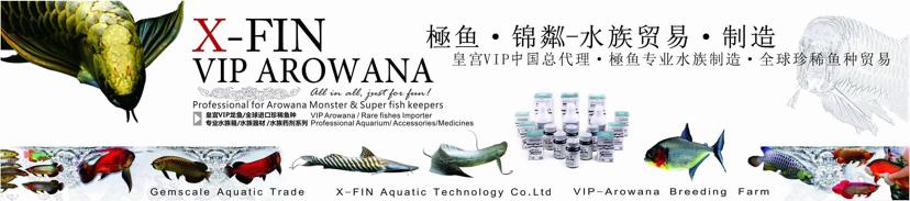 皇宫VIP龙鱼繁殖场 北京观赏鱼 北京龙鱼第7张