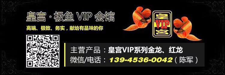 皇宫VIP龙鱼繁殖场 北京观赏鱼 北京龙鱼第9张