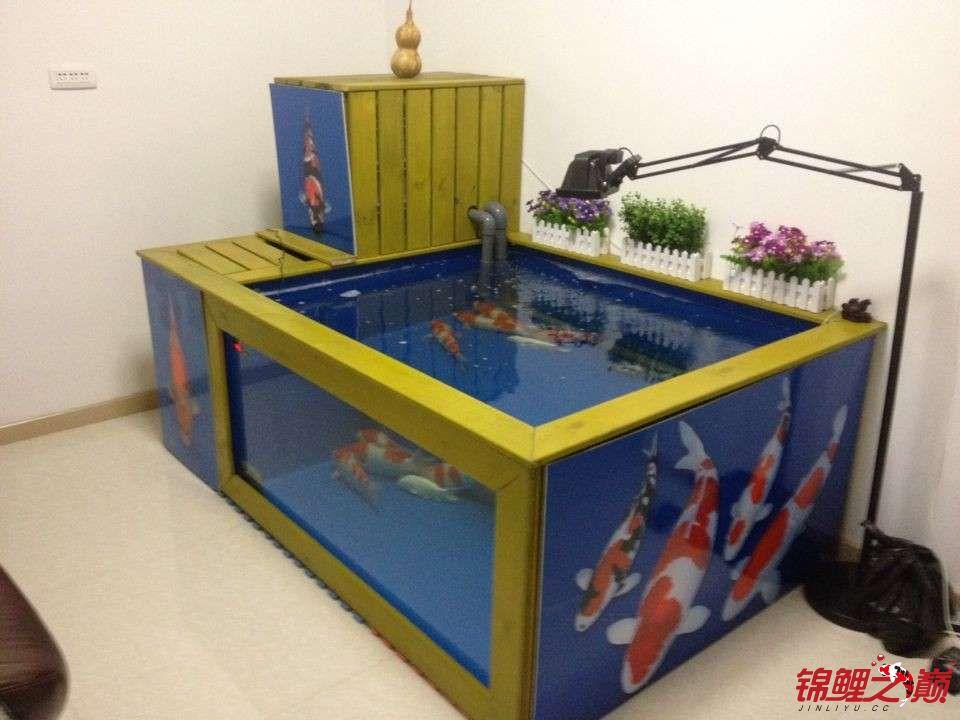 新缸陋鱼 北京观赏鱼 北京龙鱼第1张