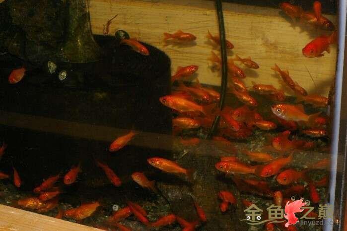 养了一缸小红怎么样? 北京观赏鱼 北京龙鱼第1张