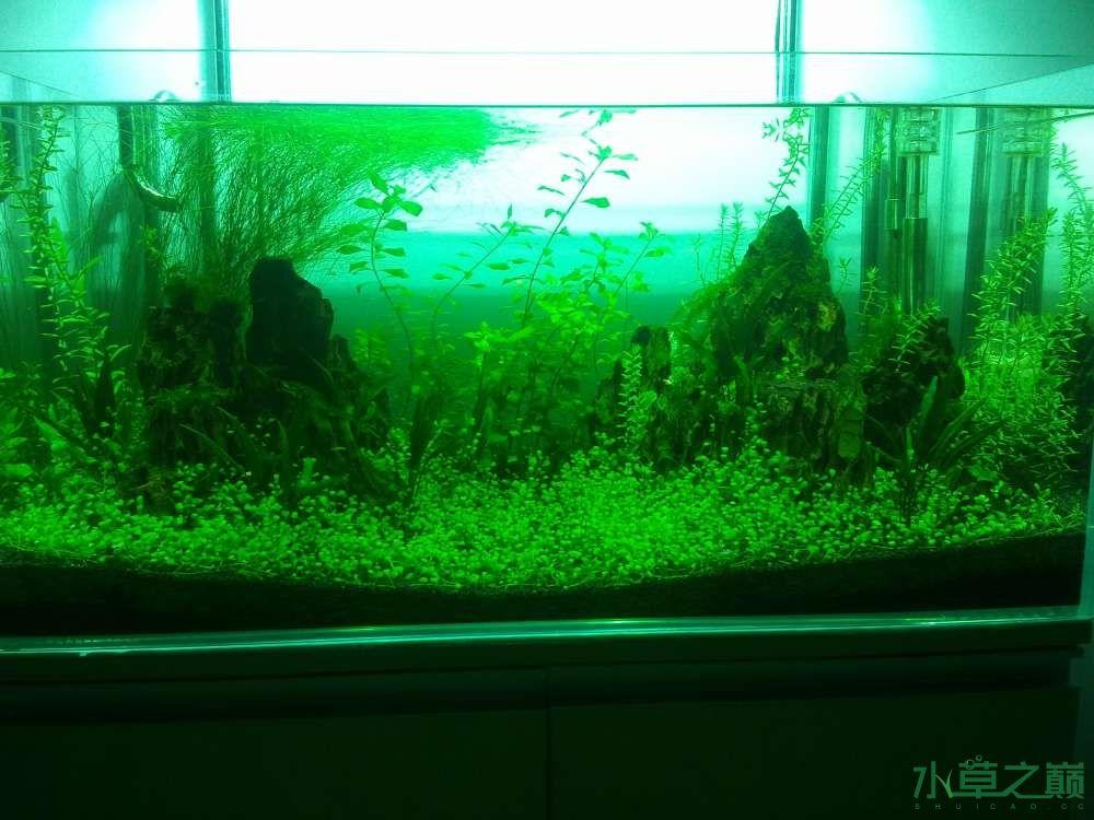 千寻杯造景比赛+中缸组:我的草缸 北京观赏鱼 北京龙鱼第2张