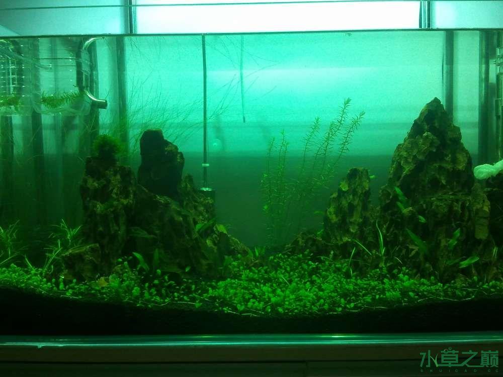 千寻杯造景比赛+中缸组:我的草缸 北京观赏鱼 北京龙鱼第5张